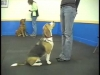Embedded thumbnail for Easy Stay Proofing – SIRIUS Adult Dog Training
