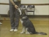 Embedded thumbnail for On Leash Heeling - SIRIUS Puppy Training Classic