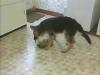 Embedded thumbnail for Reading Play Behavior 3 - Training the Companion Dog 1 – Socialization & Training