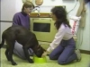 Embedded thumbnail for Food Bowl Handling - SIRIUS Puppy Training Classic