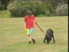 Embedded thumbnail for On Leash Following - Dog Training for Children