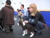 Embedded thumbnail for Grab Collar & Give Treat - SIRIUS Puppy Training Redux