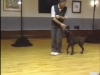 Embedded thumbnail for Off Leash Heeling - SIRIUS Puppy Training Classic