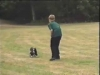 Embedded thumbnail for Following - Dog Training for Children