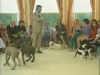 Embedded thumbnail for Serious Playtime Recalls - Training the Companion Dog 1 – Socialization & Training