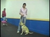 Embedded thumbnail for Instructive Reprimand – SIRIUS Adult Dog Training