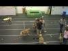 Embedded thumbnail for (Part 2) Bridget Brady – Narnia Pet Behavior and Training