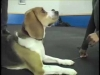 Embedded thumbnail for More Jazz & Settle– SIRIUS Adult Dog Training