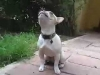 Embedded thumbnail for Housetraining a Puppy