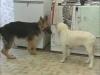 Embedded thumbnail for Reading Play Behavior 4 - Training the Companion Dog 1 – Socialization & Training