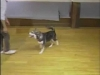 Embedded thumbnail for Fewer Treats, Better Recalls - SIRIUS Puppy Training Classic