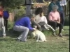 Embedded thumbnail for At the Dog Park - SIRIUS Puppy Training Classic