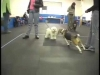 Embedded thumbnail for Polite Greetings – SIRIUS Adult Dog Training