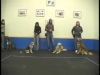 Embedded thumbnail for Woof Relay – SIRIUS Adult Dog Training