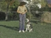 Embedded thumbnail for Heeling with Laura - SIRIUS Puppy Training Classic