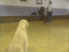 Embedded thumbnail for Suzie Shows Off - SIRIUS Puppy Training Classic