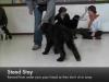 Embedded thumbnail for Week 5 Part 1 (SIRIUS Berkeley Puppy 1)