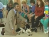 Embedded thumbnail for Settle on the Side - Training the Companion Dog 2 – Behavior Problems