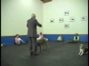 Embedded thumbnail for Distance Position Changes – SIRIUS Adult Dog Training