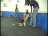 Embedded thumbnail for Verbal Stand – SIRIUS Adult Dog Training