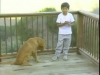 Embedded thumbnail for Happy Owners & Happy Dogs - SIRIUS Puppy Training Classic