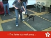 Embedded thumbnail for Week 6 Part 2 (SIRIUS SF Puppy 2)