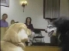 Embedded thumbnail for Nessie Comes Out to Play - SIRIUS Puppy Training Classic