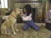 Embedded thumbnail for Handling & Examining - SIRIUS Puppy Training Classic