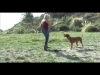Embedded thumbnail for (Part 2) Dina Zaphiris – The Behavior Savior