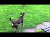 Embedded thumbnail for Talking Dogs