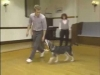 Embedded thumbnail for Every Dog is Different - SIRIUS Puppy Training Classic
