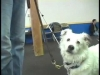 Embedded thumbnail for Reward Attention – SIRIUS Adult Dog Training