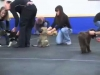 Embedded thumbnail for Following - SIRIUS Puppy Training Redux