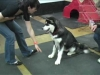 Embedded thumbnail for Week 4 Part 2 (SIRIUS SF Puppy 2)