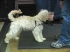 Embedded thumbnail for Week 6 Part 1 (SIRIUS SF Puppy 2)