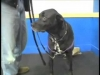 Embedded thumbnail for Reward Training Intro – SIRIUS Adult Dog Training