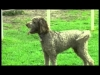 Embedded thumbnail for (Part 2) Adriana Milne - Pet Pals at the Park