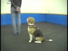 Embedded thumbnail for Active Attention – SIRIUS Adult Dog Training