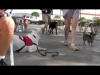 Embedded thumbnail for (Part 2) Robert Dollwet - Malibu Dog Training