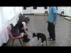 Embedded thumbnail for Four Feet on the Floor: Jumping up behaviour in puppies and dogs