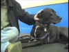 Embedded thumbnail for Give Dogs Time – SIRIUS Adult Dog Training