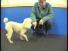 Embedded thumbnail for Heeling Explained – SIRIUS Adult Dog Training