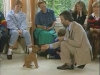 Embedded thumbnail for Luring Littles - Training the Companion Dog 1 – Socialization & Training