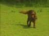 Embedded thumbnail for Distance Sit 3 – Surprise - Training Dogs with Dunbar