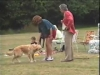 Embedded thumbnail for Come Here & Go To 1 – Two Handlers - Dog Training for Children