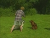 Embedded thumbnail for Distance & Distractions - Training Dogs with Dunbar
