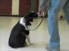 Embedded thumbnail for Week 3 Part 1 (SIRIUS Berkeley Puppy 1)