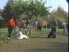 Embedded thumbnail for Fun & Games - SIRIUS Puppy Training Classic