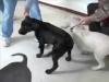 Embedded thumbnail for Week 4 Part 1 (SIRIUS Berkeley Puppy 1)