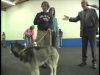 Embedded thumbnail for Training Oppurtunities – SIRIUS Adult Dog Training